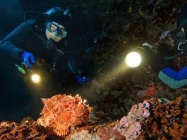 Night Diving in the Caribbean Bonaire