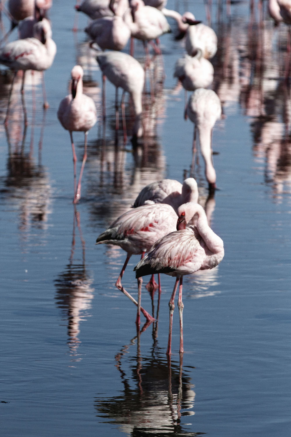Flamingoes at Walvis Bay, Namibia