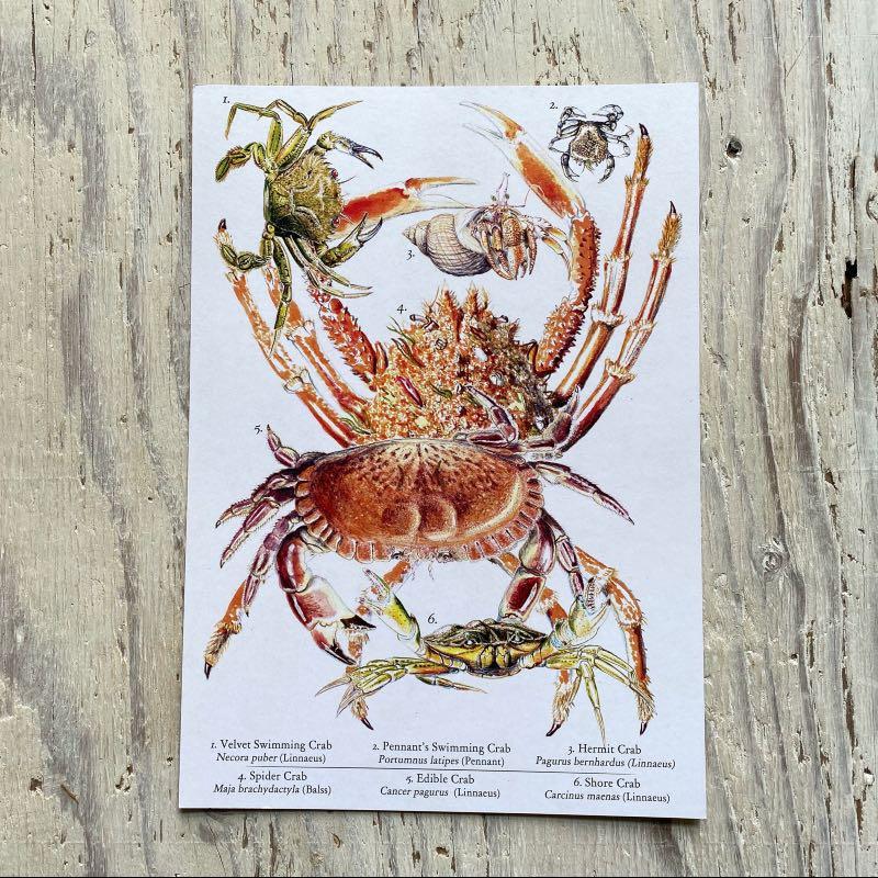 Crabs Galore Art Print