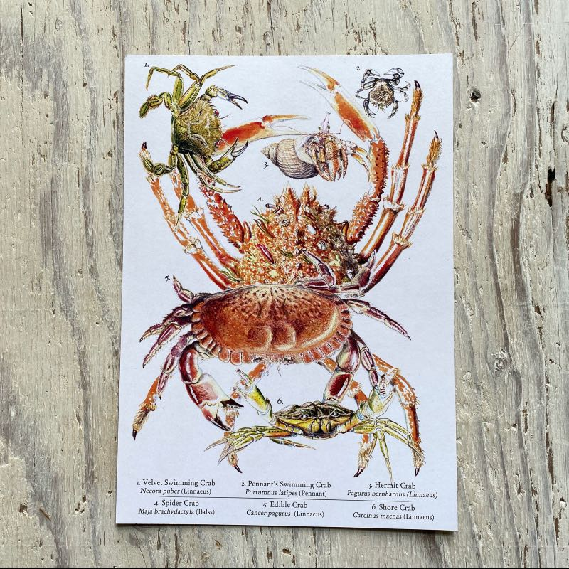 Crabs Galore Art Print