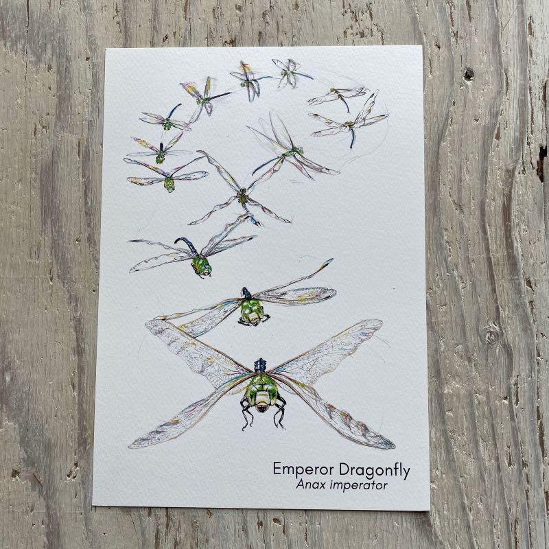 Emperor Dragonfly Flight Art Print