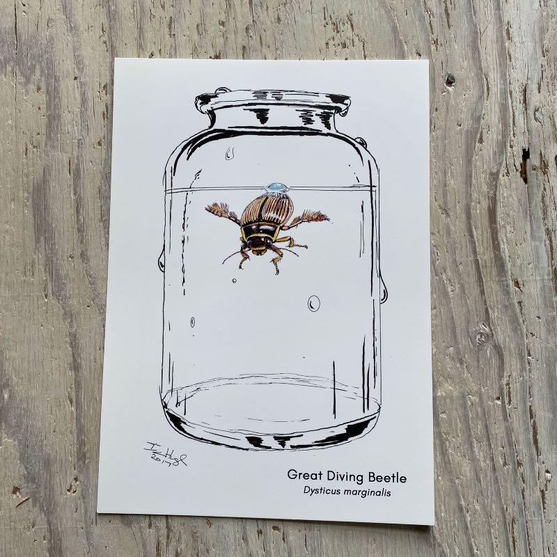 Great Diving Beetle Art Print
