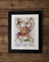 crabs art print