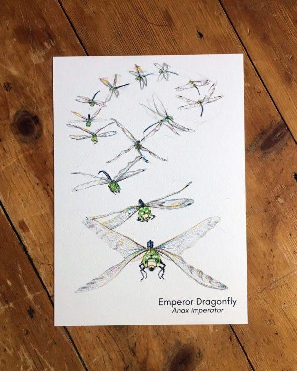 dragonfly flight art print
