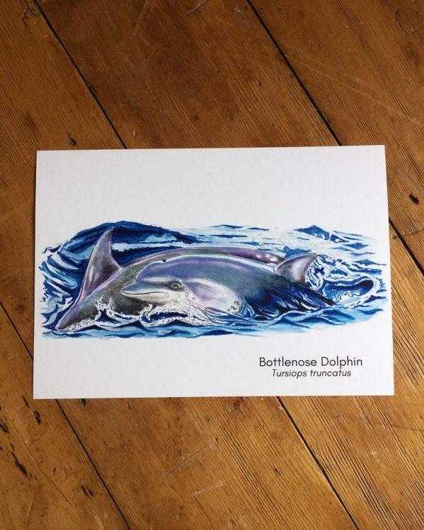 bottlenose dolphin art print