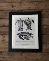 leatherback turtle art print