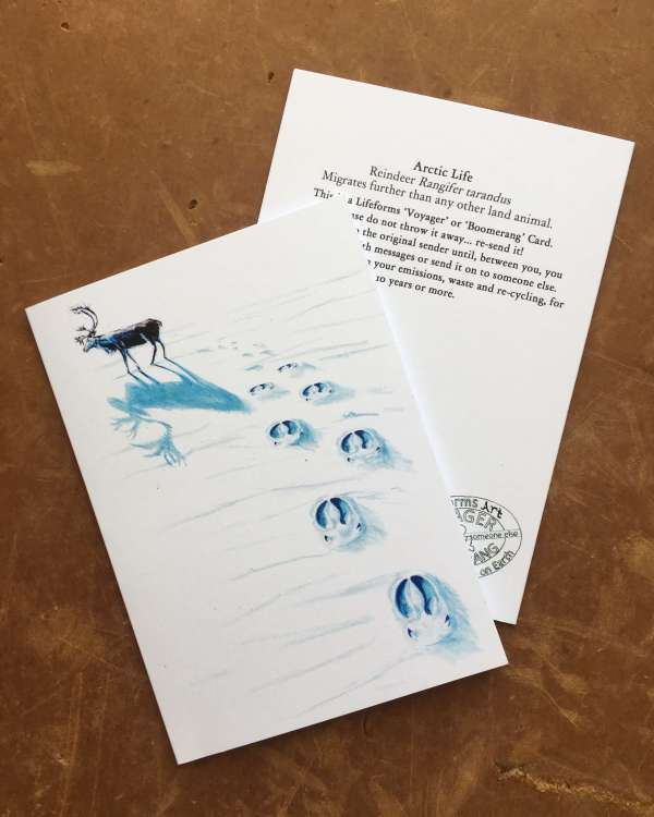 Arctic life art cards