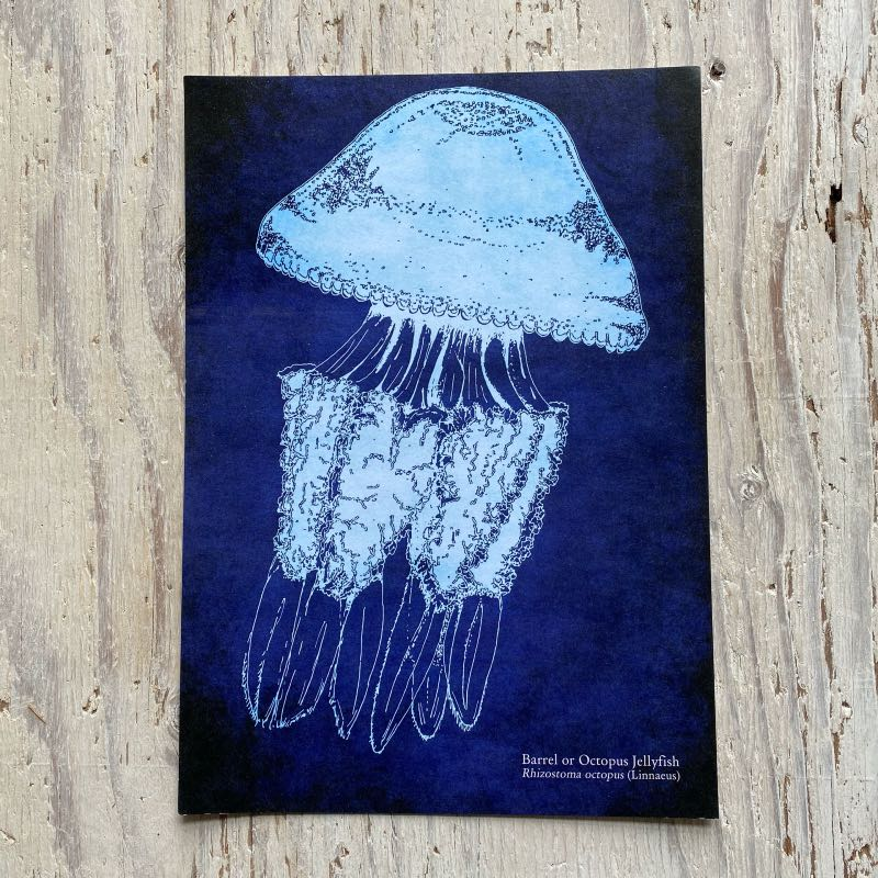 Barrel Jellyfish Art Print