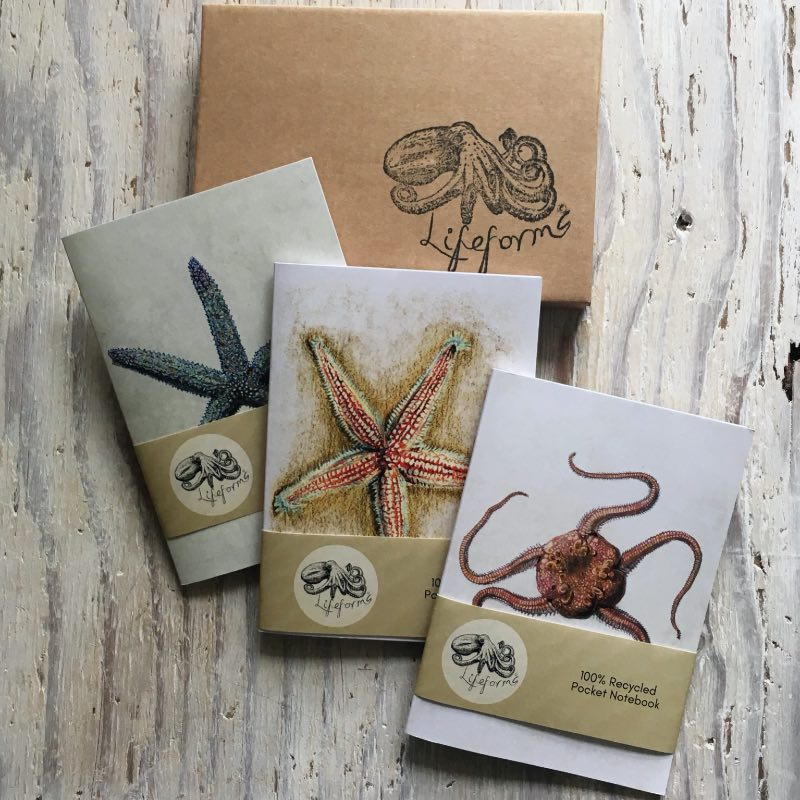 Echinoderms Pocket Notebook Set