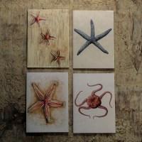 Echinoderms pocket notebook gift box.