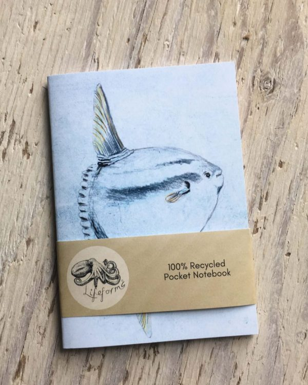 ocean sunfish pocket notebook