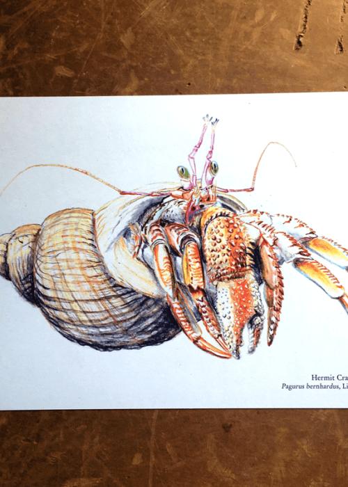 hermit crab print