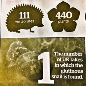 glutinous snail bbc wildlife