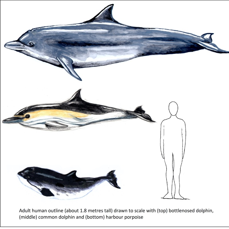 dolphin and porpoise fun pack