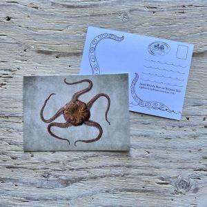 sand brittle star postcard