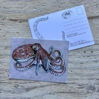 curled octopus postcard