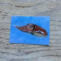 little Atlantic cuttlefish postcard