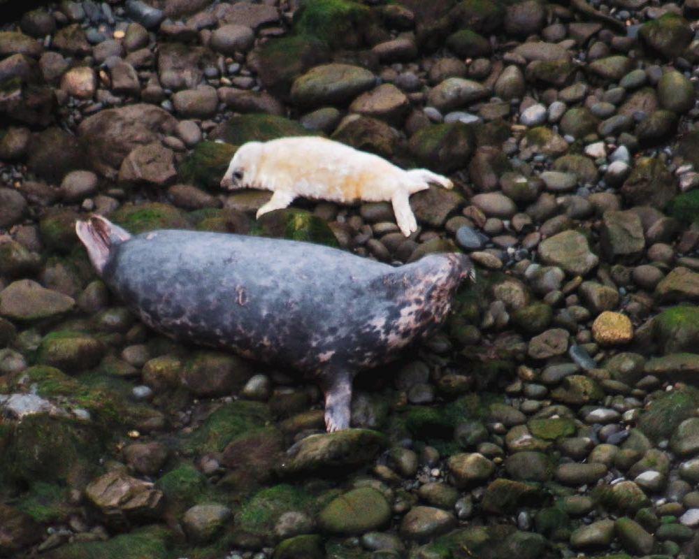 celebrating seal pupping season