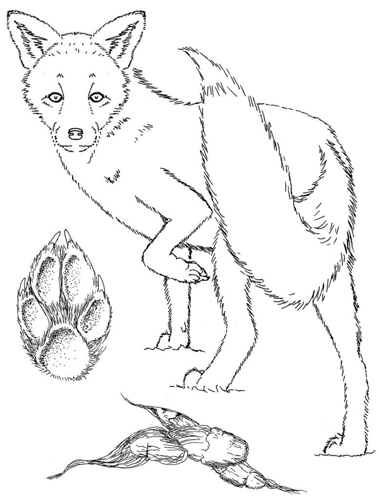 Fox colouring sheet