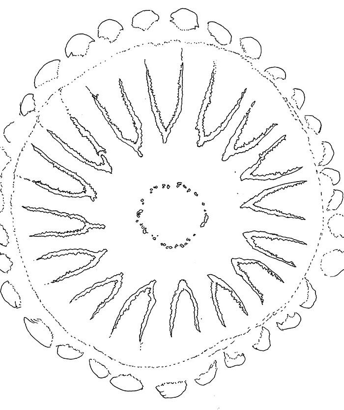 Compass-Jellyfish-Lineart