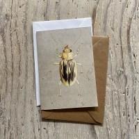 Beachcomber Beetle Greetings Card
