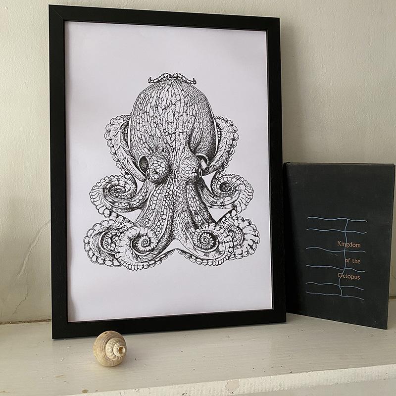 Curled Octopus Fine Art Print
