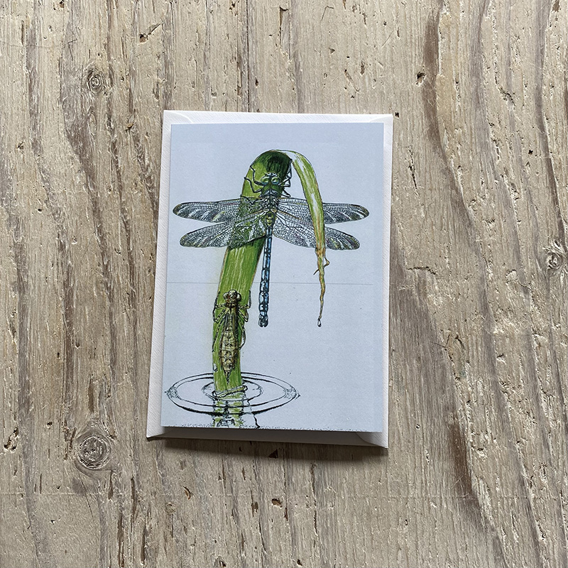Emperor Dragonfly Greetings Card