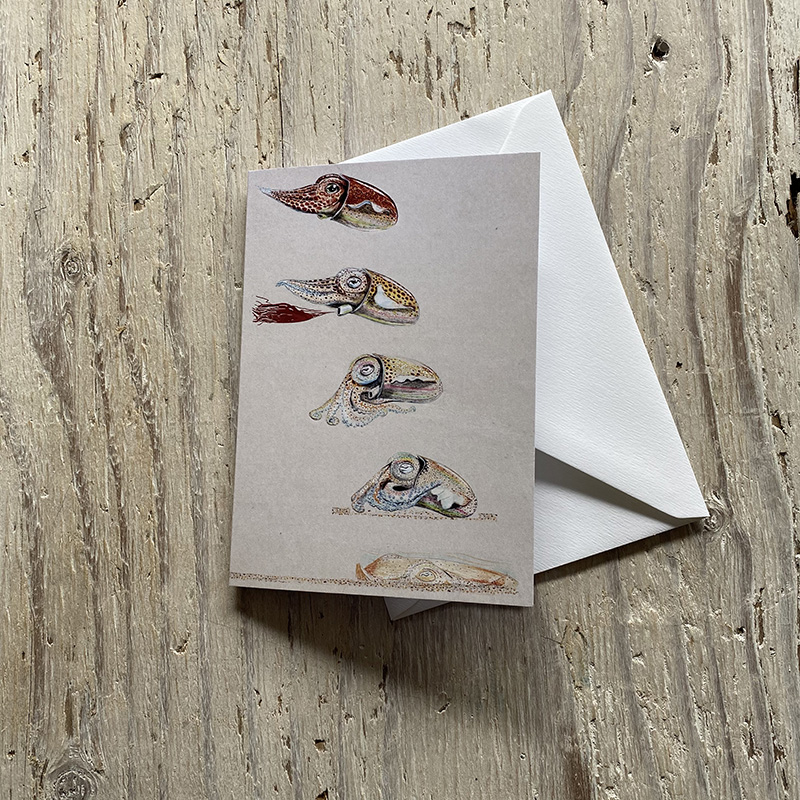Little Atlantic Cuttlefish Greetings Card
