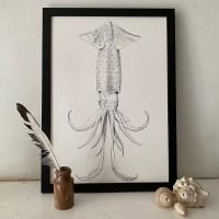 Sagittal Squid Fine Art Print