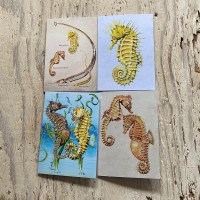 Seahorse and Pipefish Greetings Card Set