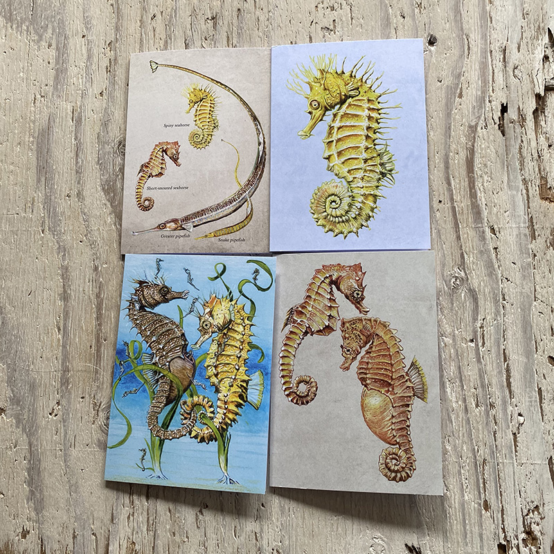 Seahorse and Pipefish Greetings Card Set