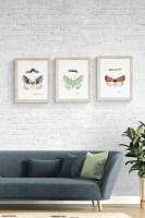 Endangered Moths FIne Art Prints
