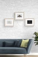 Moths Fine Art Prints