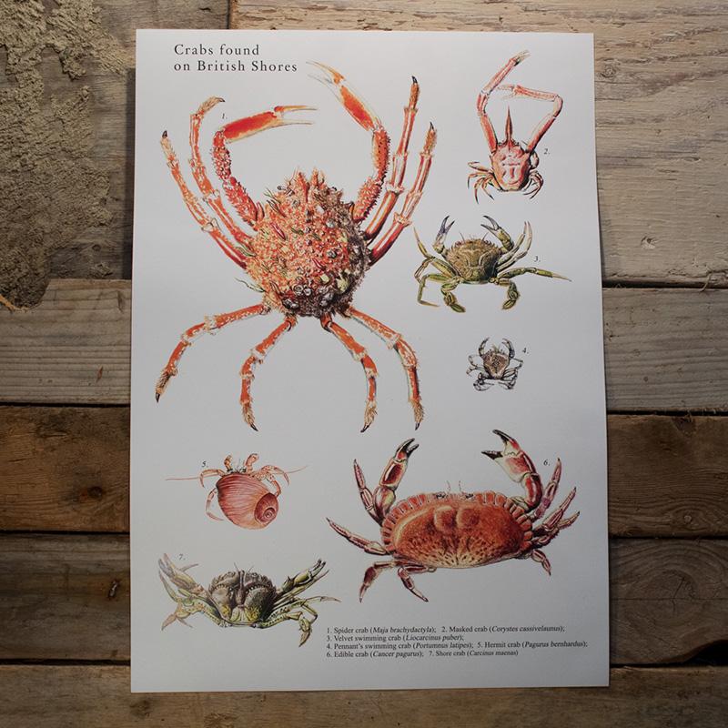 British Crabs Poster