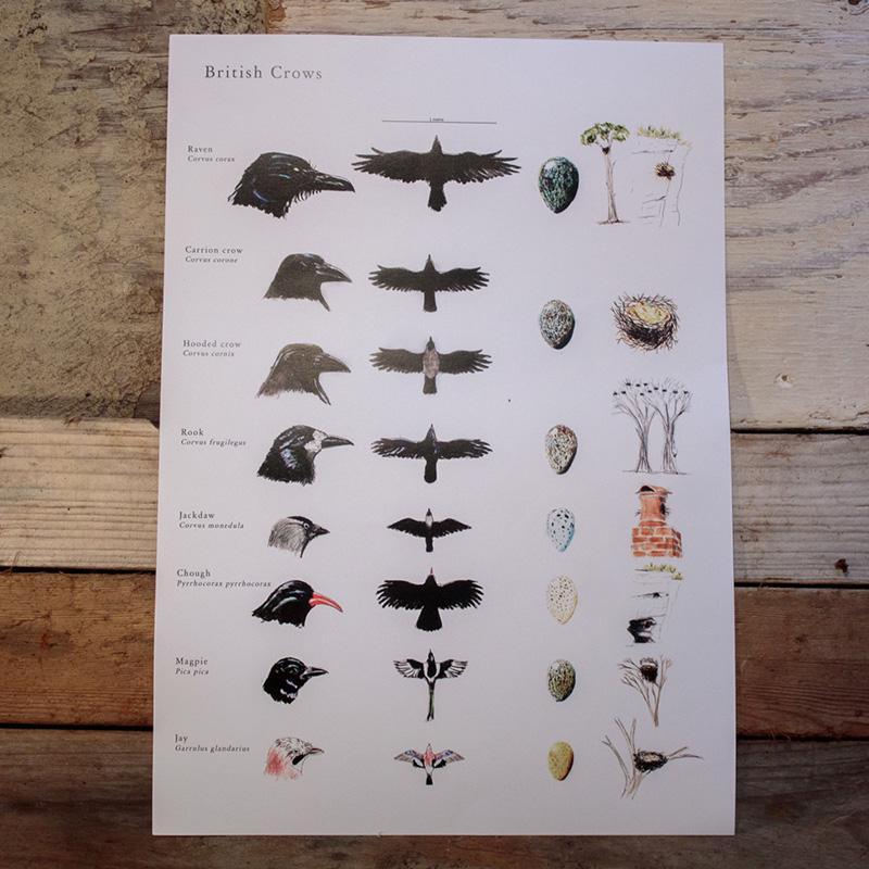 British Crows Poster