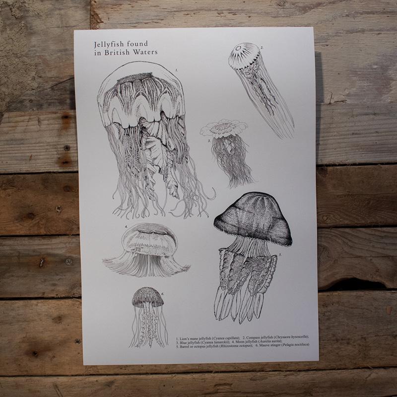 British Jellyfish Poster