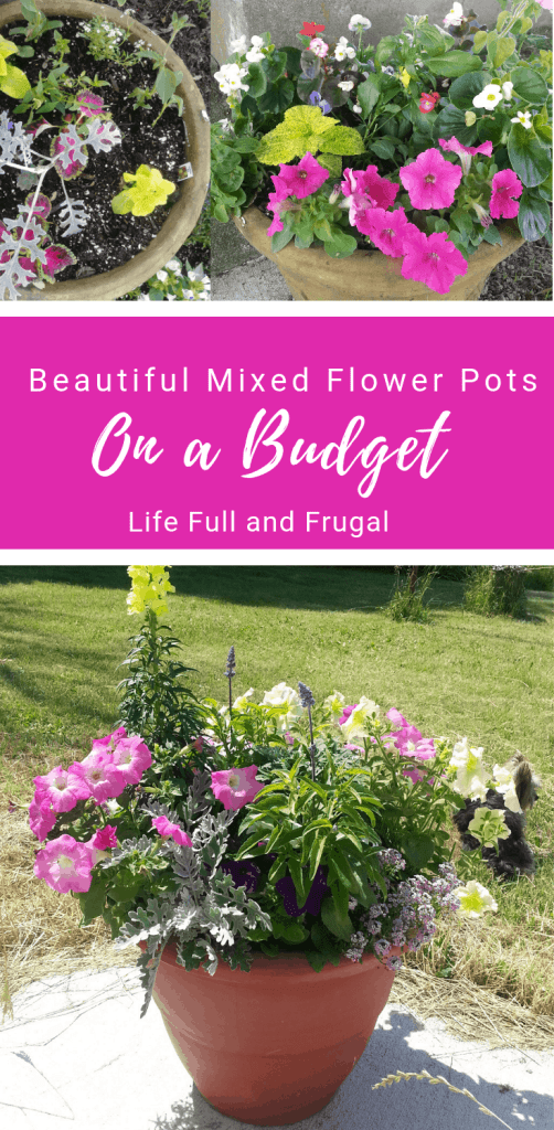 Beautiful Mixed Flower Pots on a Budget life full and frugal