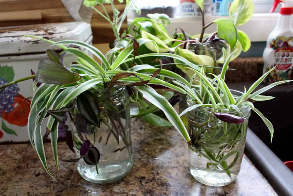 creating new plants from cuttings life full and frugal