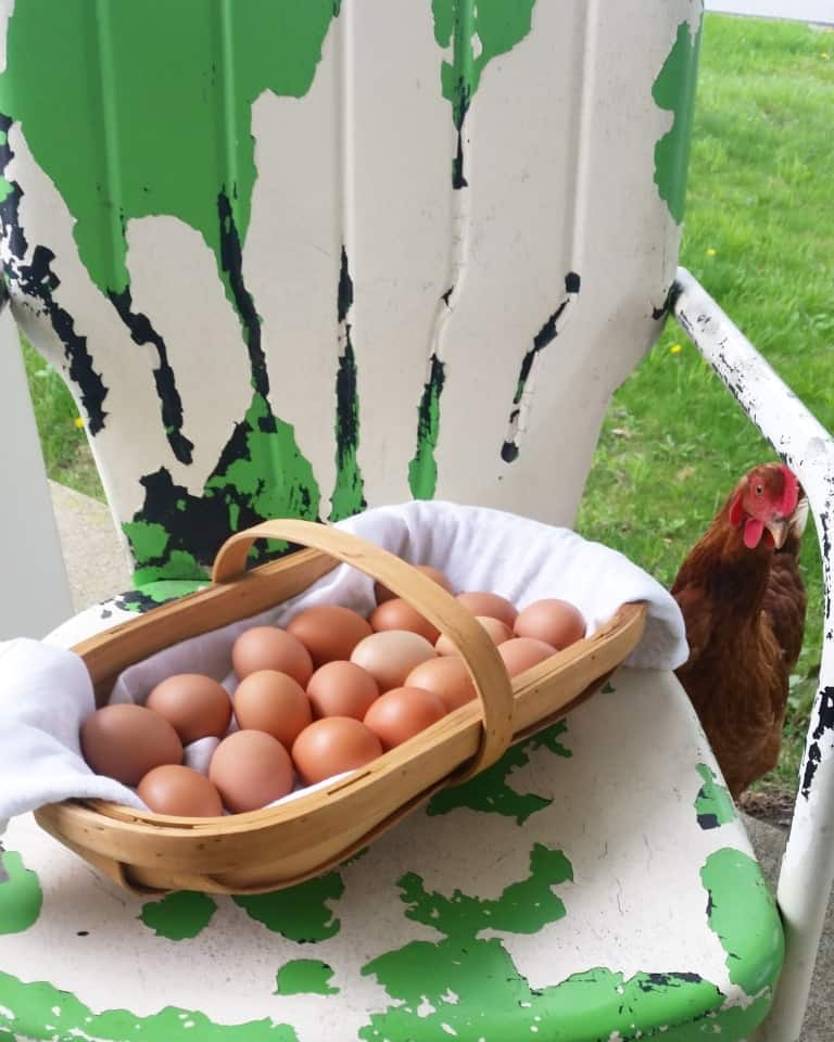 our journey to share life full and frugal chicken and eggs