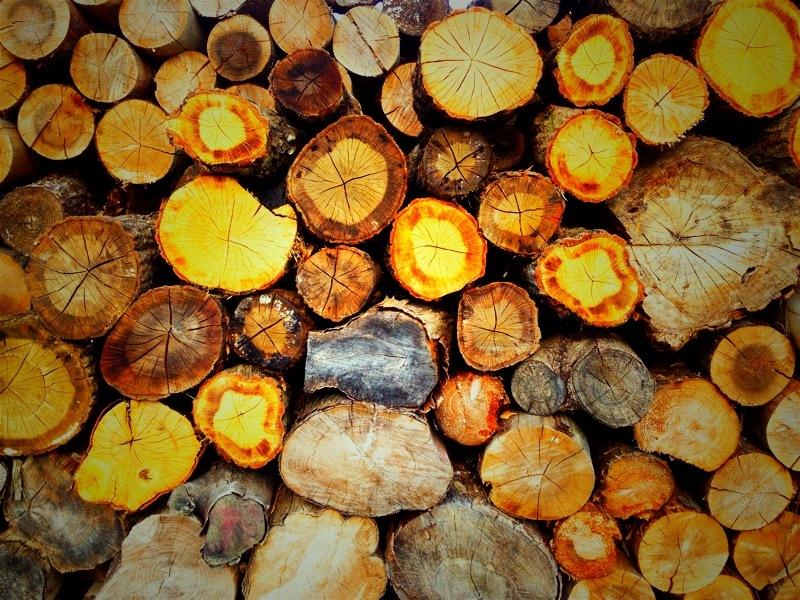 そういえば、薪ストーブって針葉樹(スギ・ヒノキ)燃やしていいの?