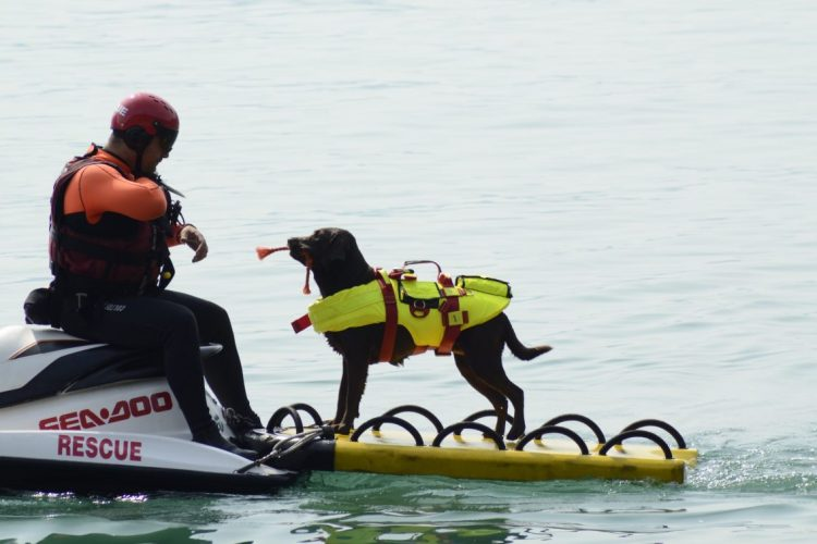 Discovery покажет собак-спасателей