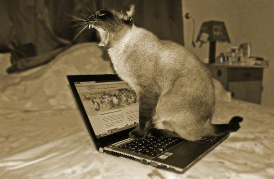 Кот, компьютер