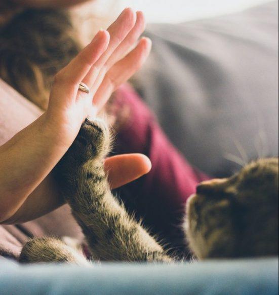 кошка, домашняя кошка, кот, человек и кошка