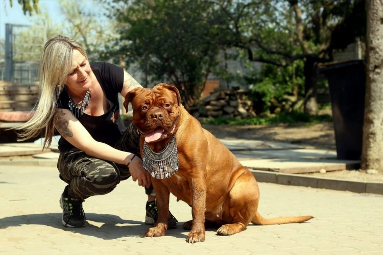 бордоский мастиф, большая собака, породы собак