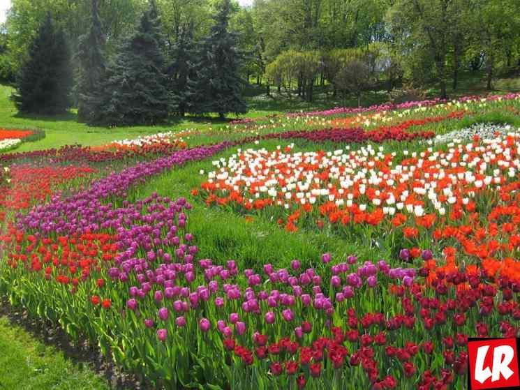 майские, выставка тюльпанов в Киеве