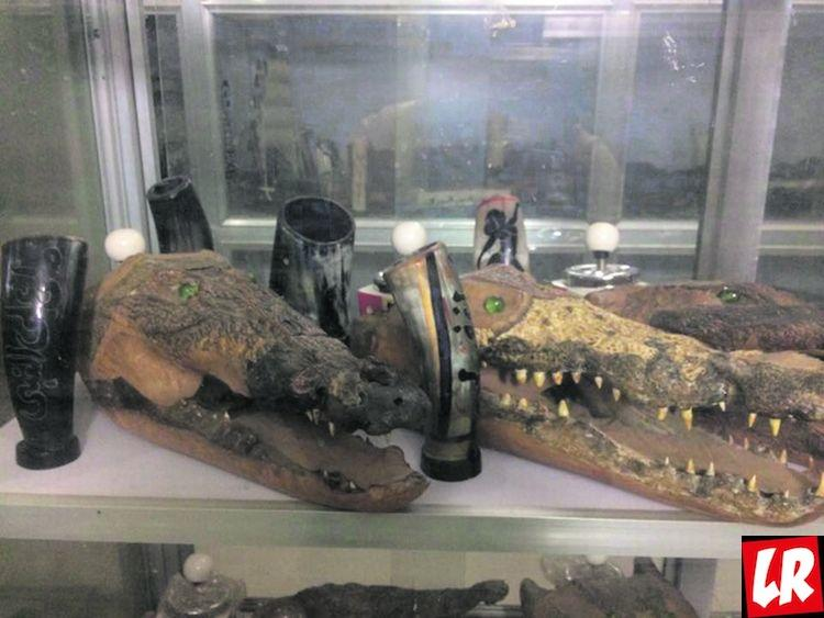 крокодил, Судан