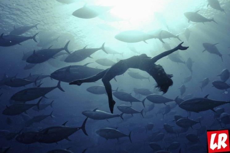 фишки дня - 2 мая, День тунца