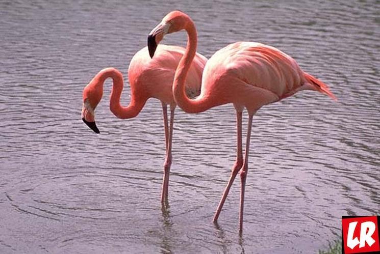 фишки дня - 23 июня, день розовых фламинго