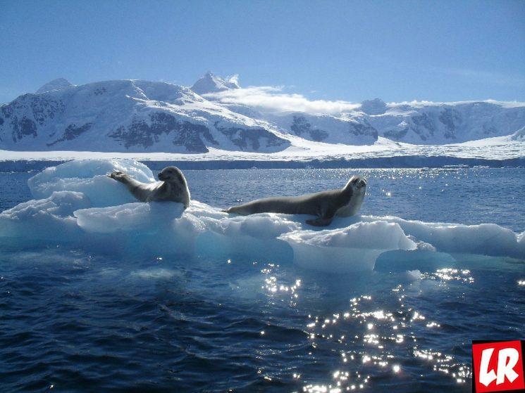 фишки дня - 8 июня, Южный океан, день океанов