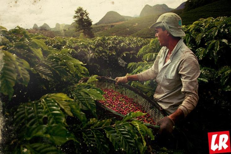 фишки дня - 1 октября, день кофе, кофе Бразилия